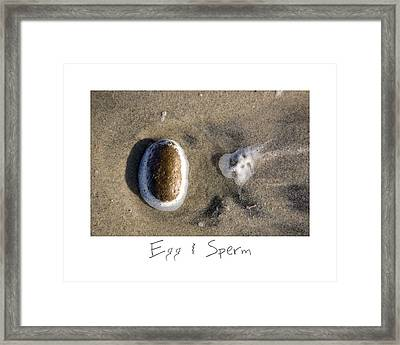Egg And Sperm Framed Print by Peter Tellone