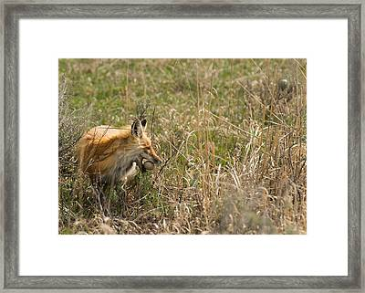 Egg Thief Framed Print by Birches Photography