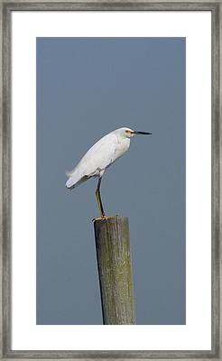 Egret 22 Framed Print by Joyce StJames