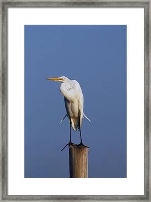 Egret 23 Framed Print by Joyce StJames