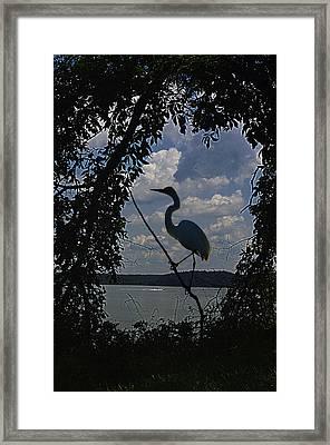Egret Against Clowds Framed Print by Ron Kruger