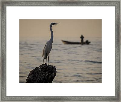 Egret And Boat Framed Print by Dane Strom