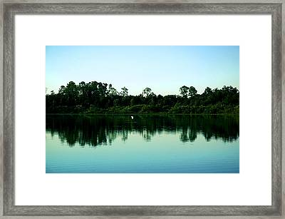 Egret And Rookery Framed Print
