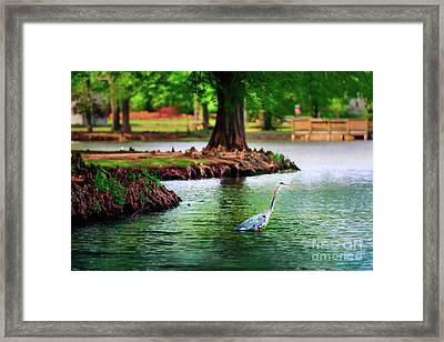 Heron At Honor Heights Framed Print by Tamyra Ayles