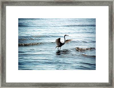 Framed Print featuring the photograph Egret At Sunset by Kathleen Stephens