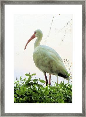 Egret At The Lake Framed Print