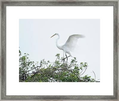 Egret Balance Framed Print by Keith Lovejoy