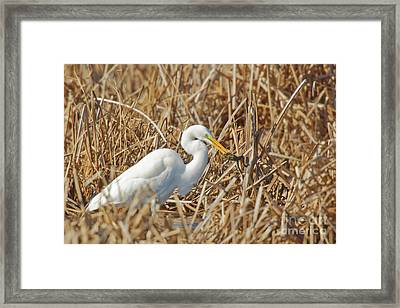 Egret Breakfast Framed Print by Natural Focal Point Photography