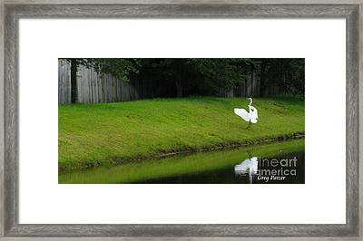 Egret Dance Framed Print by Greg Patzer