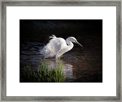 Egret Framed Print