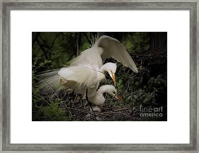 Egret Family Framed Print