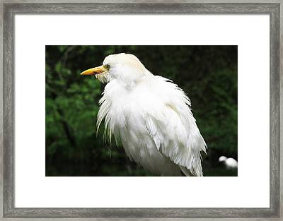 Egret Feeling Ruffled Framed Print