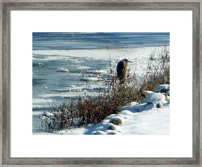 Egret Frozen Lake Framed Print