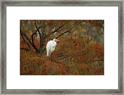Egret In Autumn Framed Print