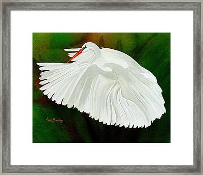 Egret In Flight Framed Print