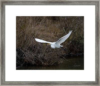 Framed Print featuring the photograph Egret In Flight by George Randy Bass