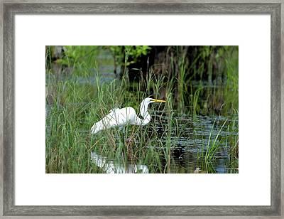 Egret In Grasses Framed Print by Tamra Lockard