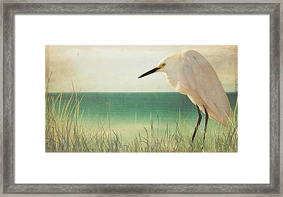 Egret In Morning Light Framed Print