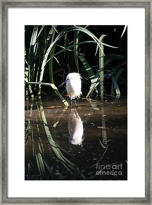 Egret In Reed Framed Print