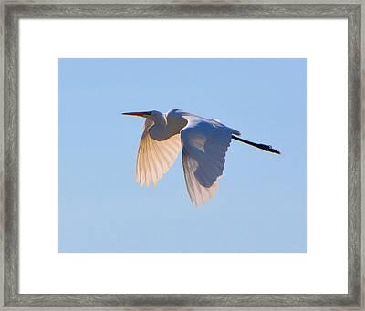 Egret In Silhouette Framed Print