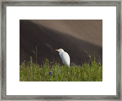 Framed Print featuring the photograph Egret In The City by Joshua House