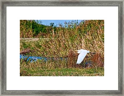Egret In The Marsh Framed Print by Bill Perry