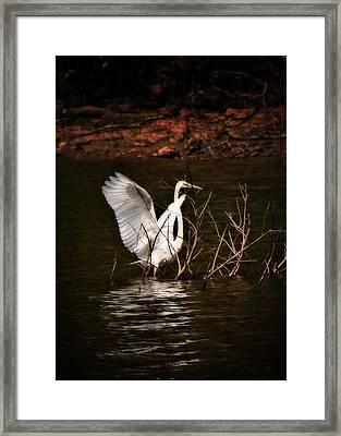 Egret Ix Framed Print by Gary Adkins