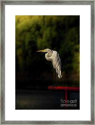 Egret On Deck Rail Framed Print by Robert Frederick