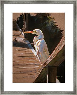 Egret On Dock Framed Print by Christopher Reid