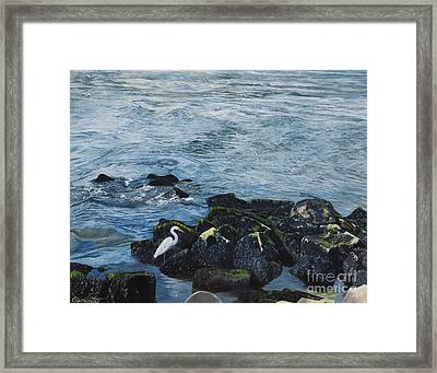 Egret On Shore Of Barnegat Bay Framed Print