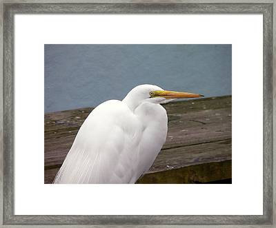 Egret On The Dock Framed Print by Al Powell Photography USA