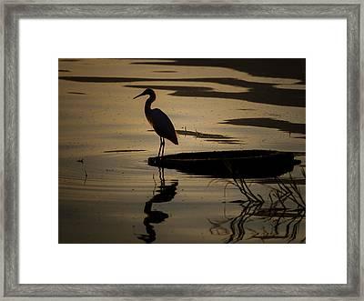 Egret On The Lake Framed Print by Dane Strom
