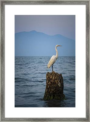 Egret On Tree Stump At Lake Chapala Framed Print by Dane Strom