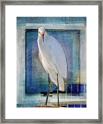 Egret Portrait Framed Print