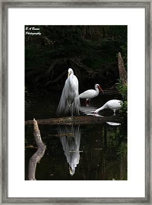 Egret Reflection Framed Print