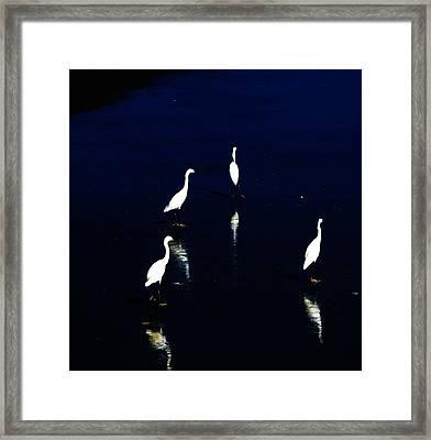 Egret Reflections Framed Print by David Lane