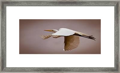 Egret Rising In Flight 1 Framed Print by Janal Koenig