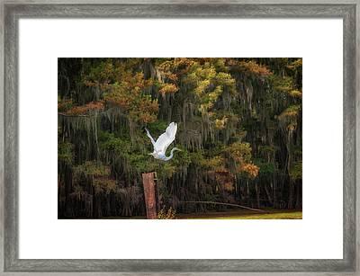 Egret Sanctuary Framed Print