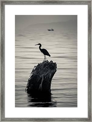 Egret Silhouette Framed Print by Dane Strom