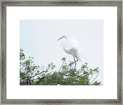 Egret Soft Landing Framed Print by Keith Lovejoy
