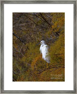 Egret Surrounded By Golden Leaves Framed Print by Ruth Jolly