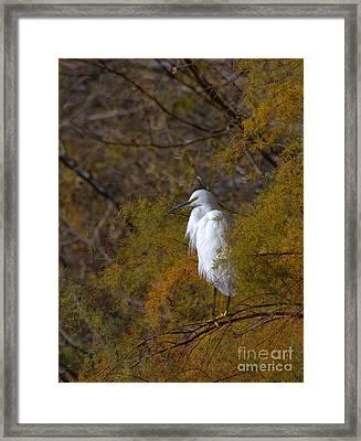 Egret Surrounded By Golden Leaves Framed Print