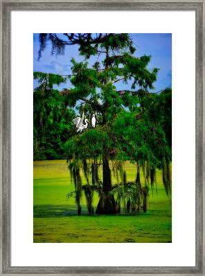 Framed Print featuring the photograph Egret Tree by Harry Spitz
