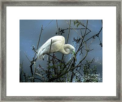 Egret Under Marina Lights Framed Print by Robert Frederick