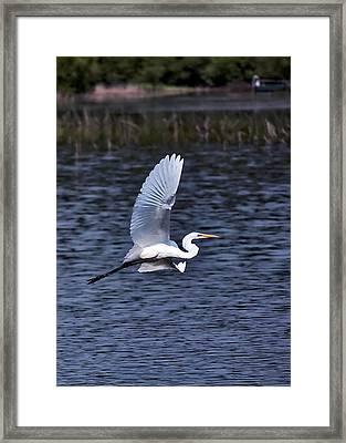 Egret Vi Framed Print by Gary Adkins