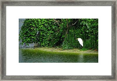 Egret Wakodahatchee Florida Wetlands Framed Print by David Mckinney