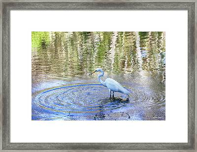 Egret With A Fish Framed Print