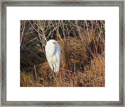Framed Print featuring the photograph Egret With Something To Say by George Randy Bass