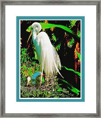 Egret3 Framed Print by John Breen