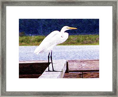 Egretful Morning Framed Print by Laura Brightwood